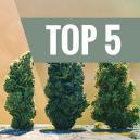 Top 5 Hoogproductieve Autoflowering Soorten