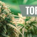 Top 10 Hybrid Cannabis Strains