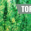 Top 7 Originele Cannabis Soorten En Hun Breeders