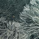 Wat Is Mycelium?