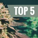 Top 5 Cannabis Soorten Voor Late Growers