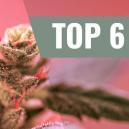 Top 6 Cannabis Soorten Voor De Liefde