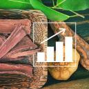 Hoe Kweek Je Banisteriopsis Caapi Vanaf Zaad?