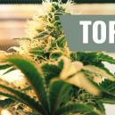 Top 7 Licht Factoren Voor Wietteelt