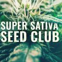 Super Sativa Seed Club is terug!