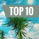 Hoogproductieve en schimmelwerende cannabis soorten
