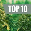 Top 10 – De Beste Feminized Cannabissoorten