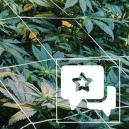 Soort Review: Casey Jones