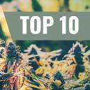 Onze Top 10 Feminized Strains Voor Buiten