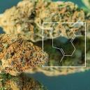Terpenen Boost: Het kweken van echte skunky wiet