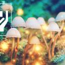 5 Verrassende voordelen van magische paddestoelen
