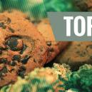 Top 10 Cannabisrecepten