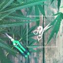 Het Snoeien van Cannabisplanten