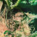 Kweektip: Het herkennen en voorkomen van toprot