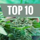 Top 10 meest voorkomende vergissingen van kwekers