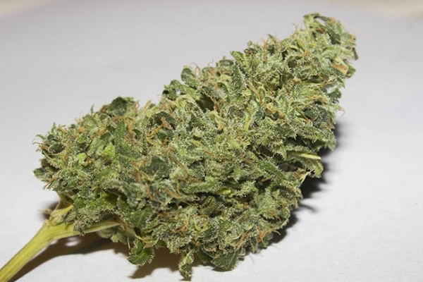 Bubblegum (Zamnesia Seeds) feminized