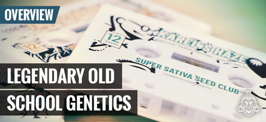 Old School Cannabis Genetica | Super Sativa Seed Club